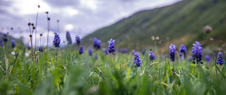 Ankstyvosios vasaros laikotarpis Svaneti